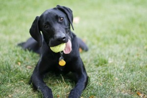 3 Tips to Teach Your Dog to Stay Happy Without You