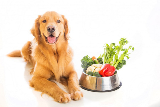 Top 4 Food Habits to Inculcate in Your Dog (Dog Image)